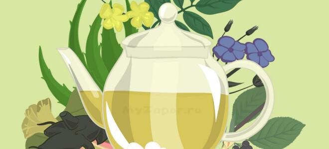 Слабительные растения и сборы от запора у взрослых