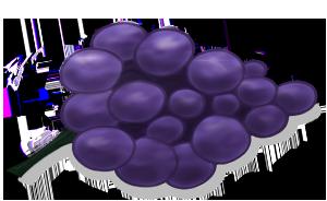 Кисть черного винограда