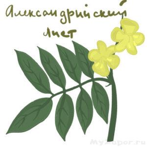 Александрийский лист