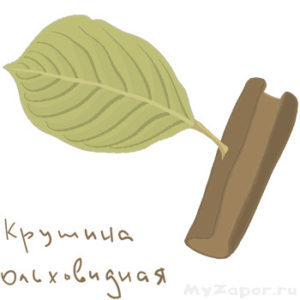 Лист крушины ольховидной